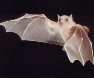 bat and animal image