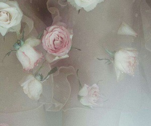 rose, water, and pastel image