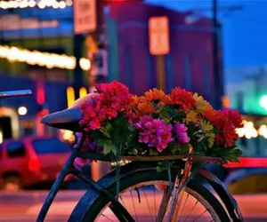 flowers, bike, and city image