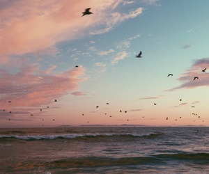 beach, beauty, and birds image