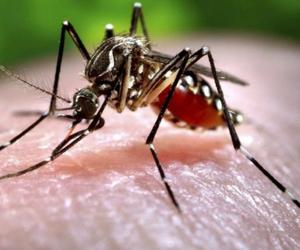 dengue, fitness, and health image