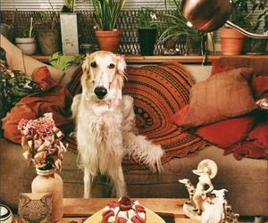 dog and borzoi image