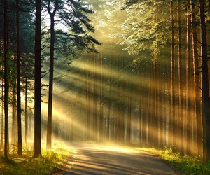 trees, sun, and forest image
