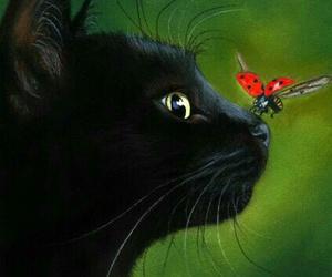cat, ladybug, and animal image