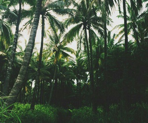 forest, jungle, and nature image