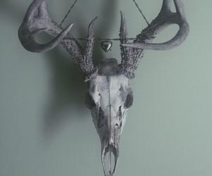 skull and beauty image