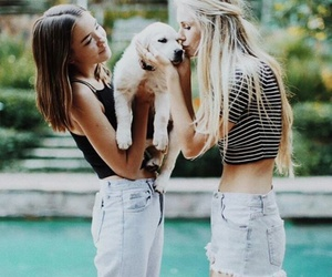 cute, dog, and brandy melville image
