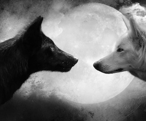 wolf, moon, and black image