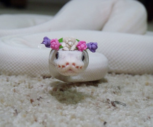 snake, flowers, and white image