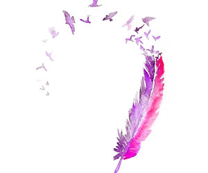feather, bird, and pink image