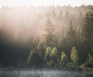 arbres, travel, and chill image