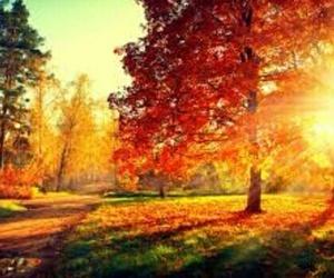 beautiful and fall image