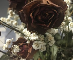 flower, rose, and love image