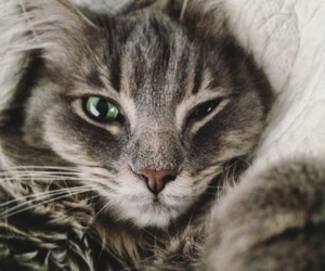 cat, close up, and kitten image
