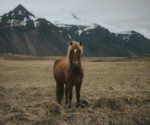 animals, horse, and nature image