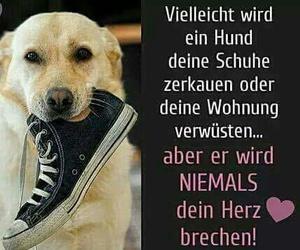 dog, hund, and texte image