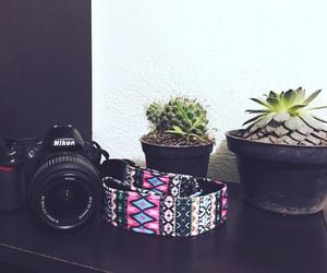 cactus, dslr, and nikon image