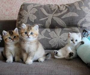 cat, kitten, and baby animals image