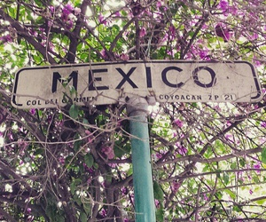 ciudad, mex, and coyoacan image