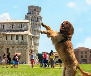 dog, funny, and Pisa image