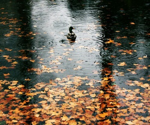 autumn, duck, and fall image