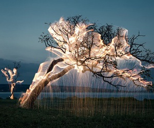 tree, light, and nature image