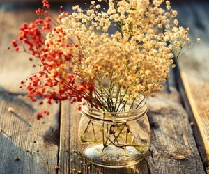 flowers, nature, and autumn image