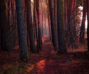 forest, trees, and autumn image