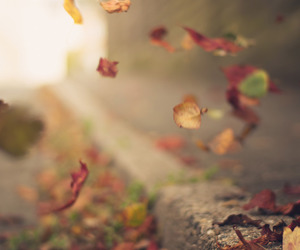 autumn, leaves, and Olympus image