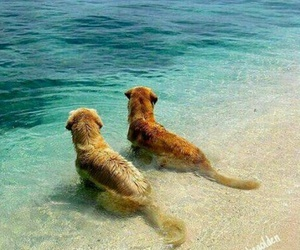 beach, dogs, and happy image