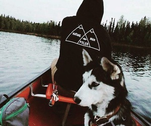 dog, nature, and husky image