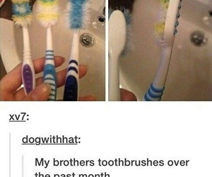 funny, toothbrush, and lol image