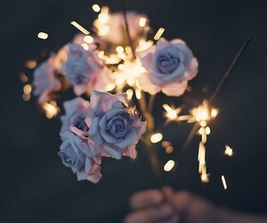flowers, rose, and light image