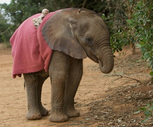 elephant, baby, and cute image