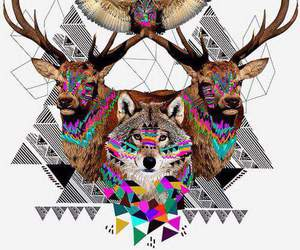 wolf, animal, and wallpaper image
