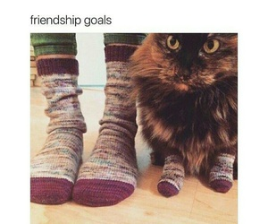 cat, funny, and goals image