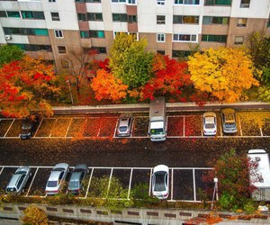 autumn, car, and fall image