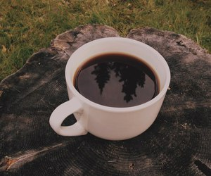 coffee, nature, and tree image