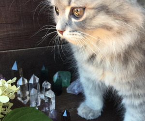 crystal, cat, and witch image