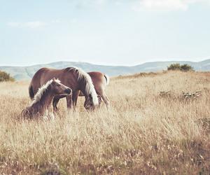 animals, beautiful, and nice image