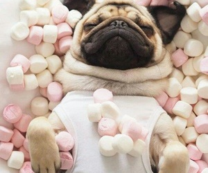 dog, marshmallow, and animal image