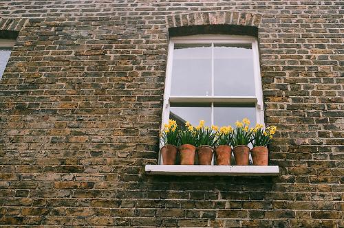 flowers, window, and vintage image
