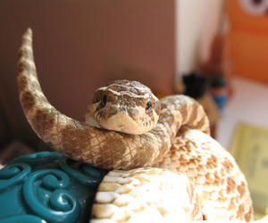 animals, reptiles, and snakes image