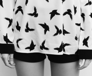 bird and black and white image