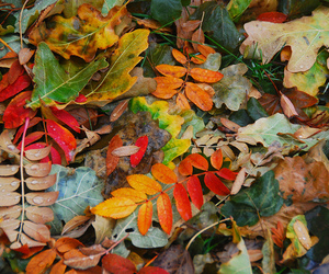 leaves, nature, and autumn image