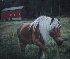 horse and beauty image