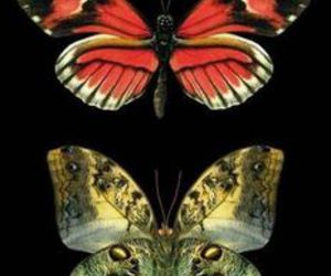 butterfly insect image