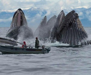 whales, ocean, and water image