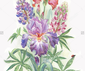 flower, watercolor, and violet image