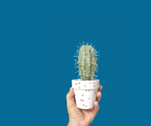 blue, cactus, and photography image